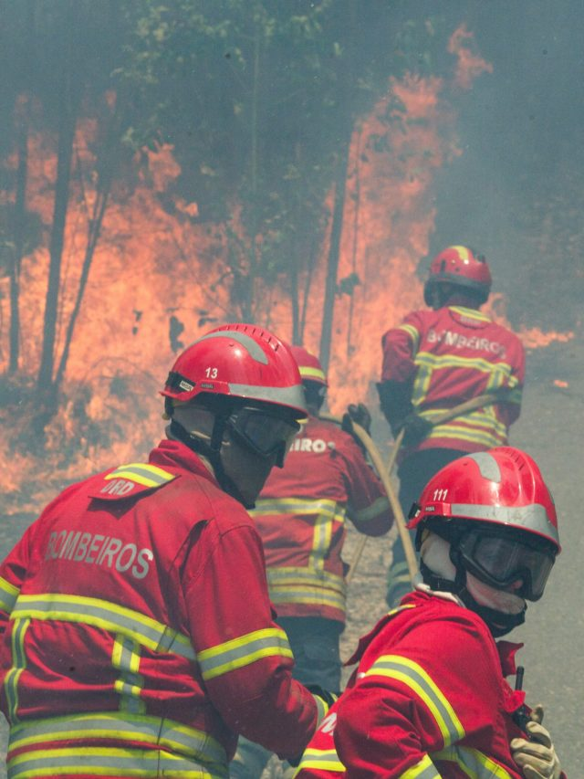 epa06035233 Firefighters battle a forest fire in Figueiro dos Vinhos, central Portugal, 18 June 2017. At least sixty two people have been killed in forest fires in central Portugal, with many being trapped in their cars as flames swept over a road on the evening of 17 June 2017. A total of 733 firefighters are providing assistance. EPA/PAULO CUNHA
